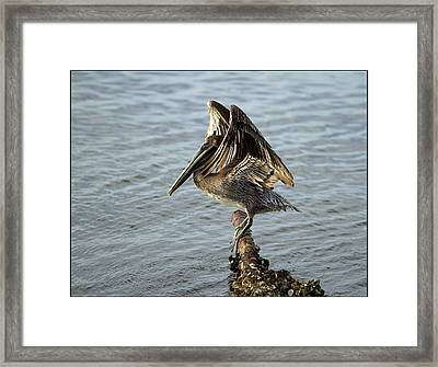 Framed Print featuring the photograph Strike A Pose by Sharon Jones