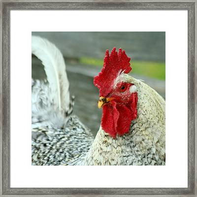 Striking A Pose Framed Print by Art Block Collections