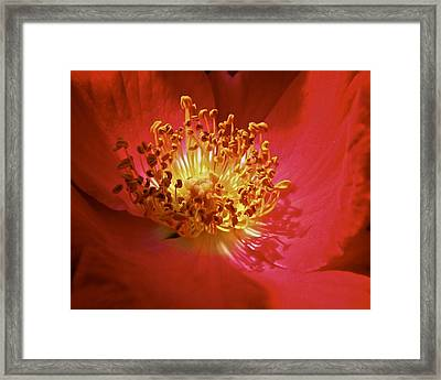 Striking It Rich Framed Print