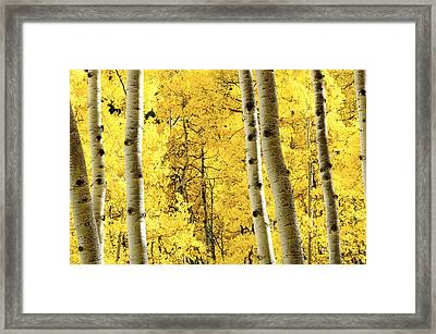 Striking It Rich Framed Print by The Forests Edge Photography - Diane Sandoval