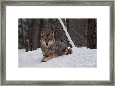 Striking The Pose Framed Print