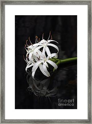 Framed Print featuring the photograph String Lily #1 by Paul Rebmann