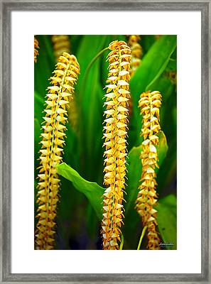 Framed Print featuring the photograph Strings Of Dendrochilum Orchids by Aloha Art