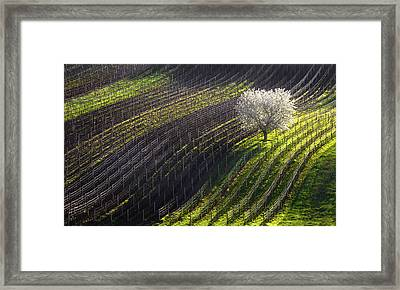 Strings Of Spring Framed Print