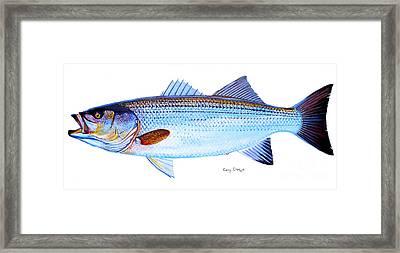 Striped Bass Framed Print