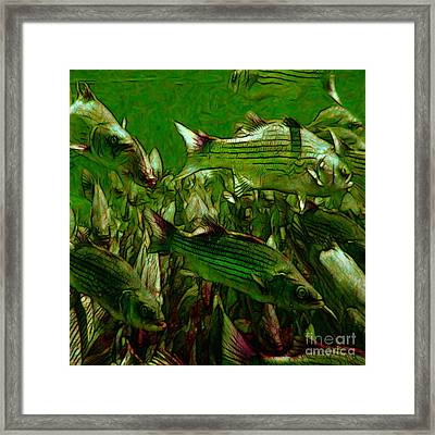 Striped Bass - Painterly V2 - Square Framed Print by Wingsdomain Art and Photography