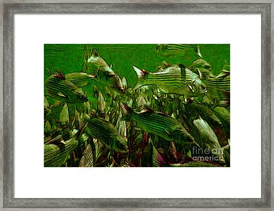 Striped Bass - Painterly V2 Framed Print by Wingsdomain Art and Photography