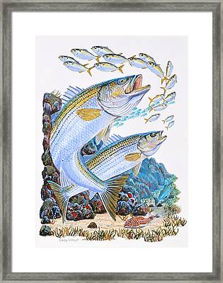 Striped Bass Rocks Framed Print by Carey Chen