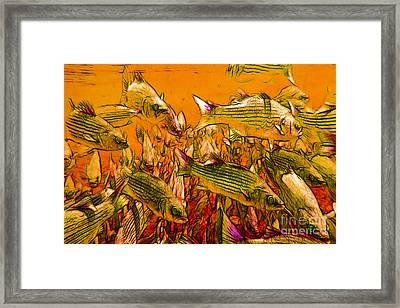 Striped Bass Framed Print by Wingsdomain Art and Photography