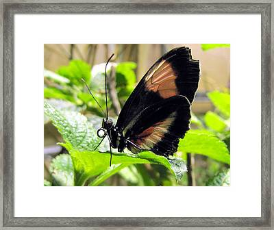 Striped Beauty Framed Print by Jennifer Wheatley Wolf