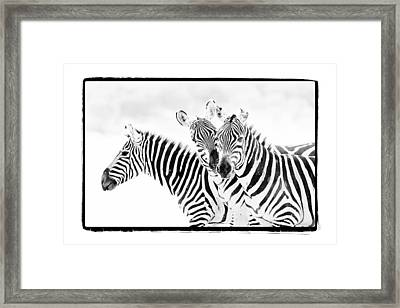 Framed Print featuring the photograph Striped Threesome by Mike Gaudaur