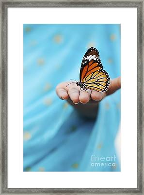 Striped Tiger Butterfly Framed Print