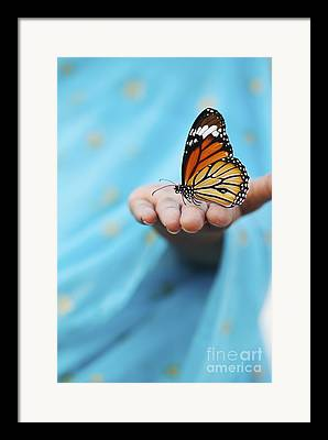 Striped Tiger Butterfly Framed Prints