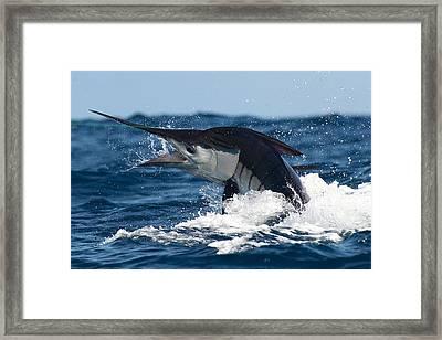 Striper Framed Print by David Granville