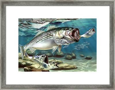 Striper - The True Monster Of Montauk Framed Print