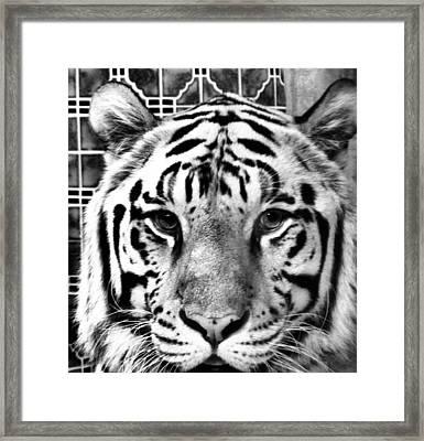 Stripes Framed Print by Dan Sproul