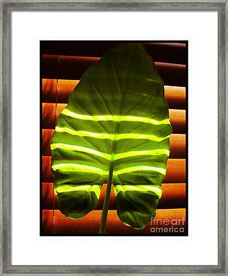 Stripes Of Light Framed Print by Nina Ficur Feenan