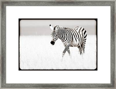 Framed Print featuring the photograph Stripes On The Move by Mike Gaudaur
