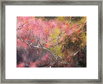 Stripped Birch Framed Print