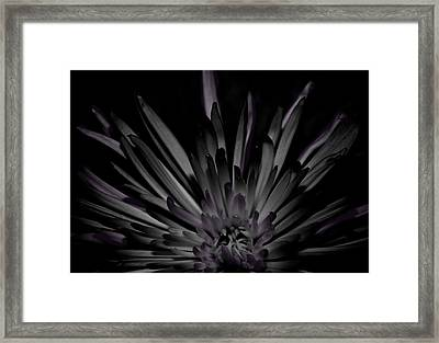 Stripped Framed Print by Tara Miller
