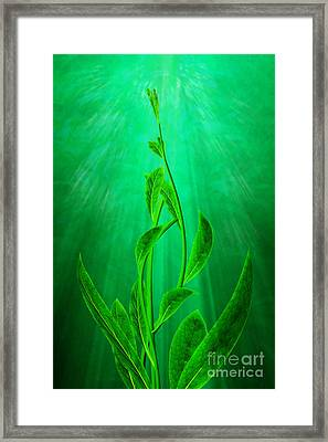 Striving Framed Print