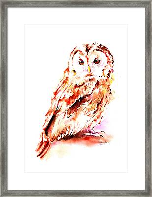 Strix Aluco Framed Print