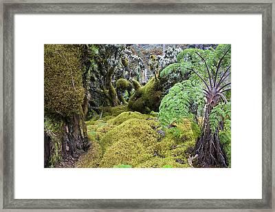 Strohblumengebuesch With Moss Framed Print