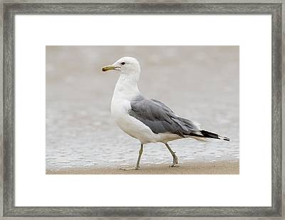 Stroll Along The Beach Framed Print