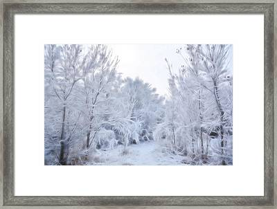Stroll Through A Winter Wonderland Framed Print by Diane Alexander
