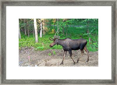Strollin Framed Print by Aimee L Maher Photography and Art Visit ALMGallerydotcom