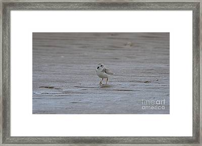Framed Print featuring the photograph Strolling by James Petersen