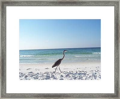 Framed Print featuring the photograph Strolling by Michele Kaiser