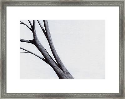 Strong Branches Between Light Framed Print