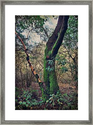Strong Enough To Hold You Framed Print by Laurie Search