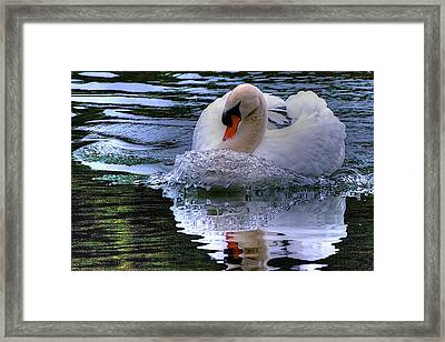 Strong Swimmer Framed Print by Dennis Baswell