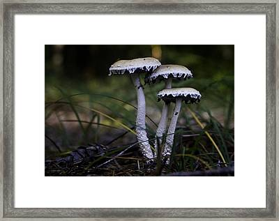 Framed Print featuring the photograph Stropharia Ambigua by Betty Depee