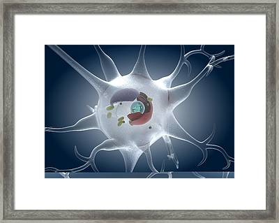 Structure Of A Nerve Cell, Artwork Framed Print by Science Photo Library