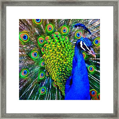 Strut Squared Framed Print by Angelina Vick