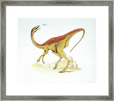 Struthiomimus Dinosaur Framed Print