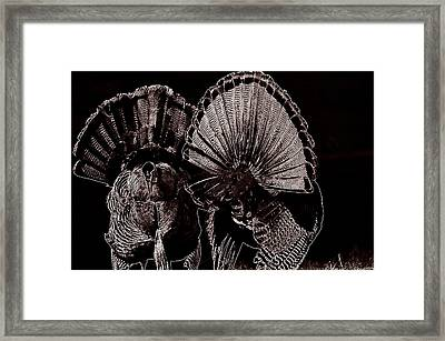 Strutters Framed Print by Todd Hostetter
