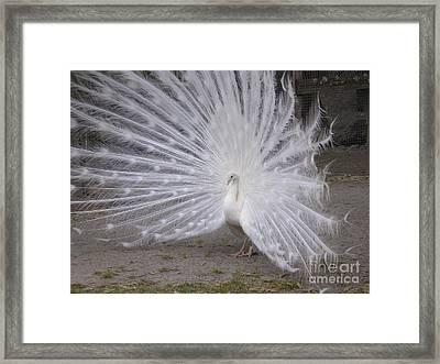 Struttin Framed Print
