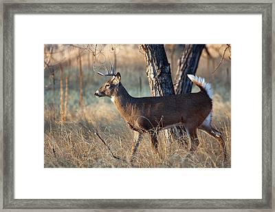 Framed Print featuring the photograph Strutting Buck by Jim Garrison