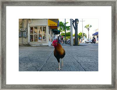 Framed Print featuring the photograph Strutting by Jon Emery
