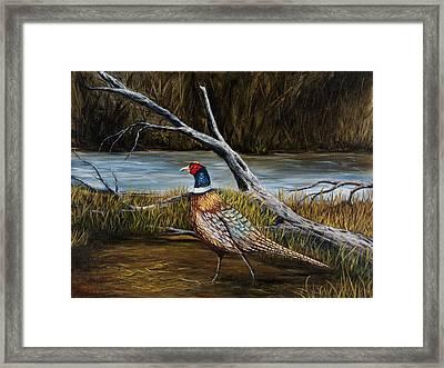 Strutting Pheasant Framed Print