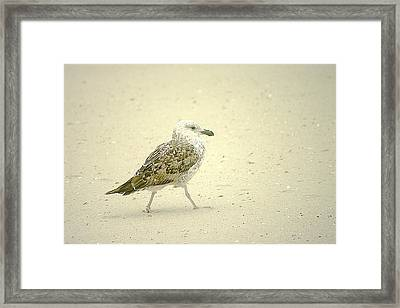 Framed Print featuring the photograph Strutting Young Seagull  by Suzanne Powers