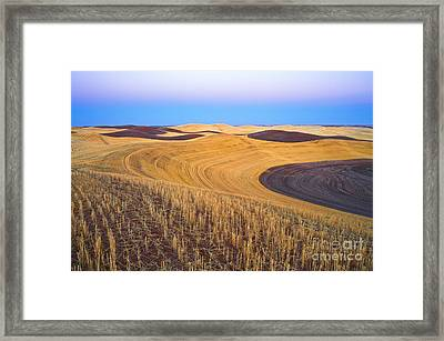 Stubble Framed Print by Don Hall