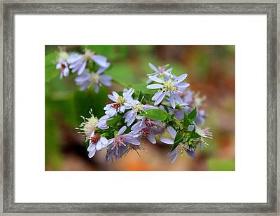 Stubborn Bloom Framed Print by Abril Gonzalez