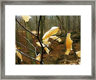 Framed Print featuring the photograph Stubborn Leaves by Jackie Carpenter
