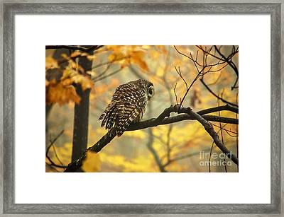 Stubborn Owl Framed Print by Debbie Green