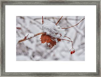 Stuck In The Middle Framed Print by Nikki McInnes